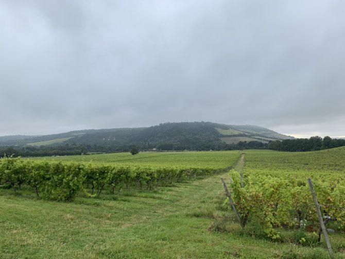 Denbies Wine Estate & Box Hill beyond